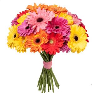 мини гербера цветы