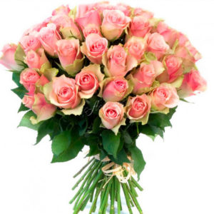 зелено-розовые розы