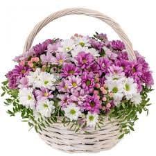 хризантема корзина