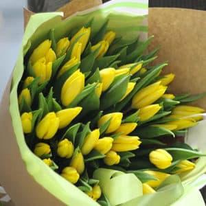 желтые тюльпаны 51