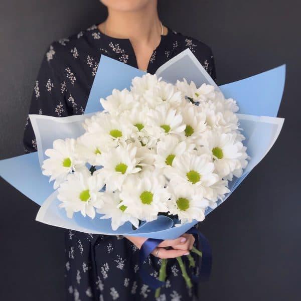 Белая ромашковая хризантема