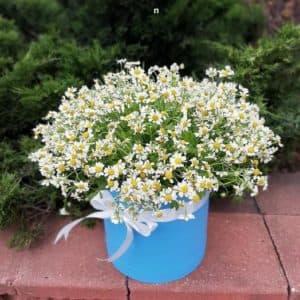 Заказать цветы курьером