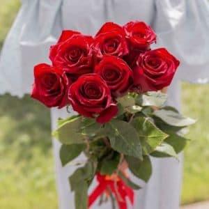 7 Красных Роз Эквадор (60 см.)