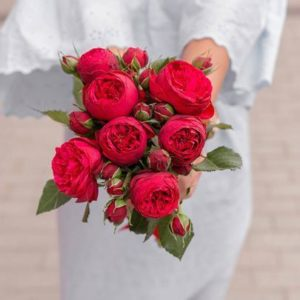 7 Красных Роз Кустовых Пионовидных