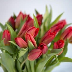 Тюльпаны букет красные