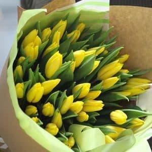 Желтые тюльпаны голландские