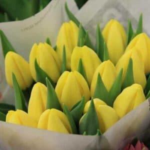 Тюльпан стронг голд