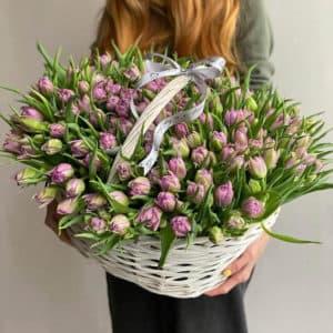251 тюльпан