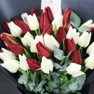25 белых и красных тюльпана