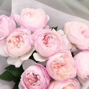 9 пионовидных розовых роз