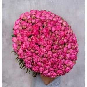 151 пионовидная роза
