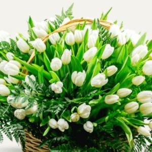 Белые тюльпаны в корзине с зеленью