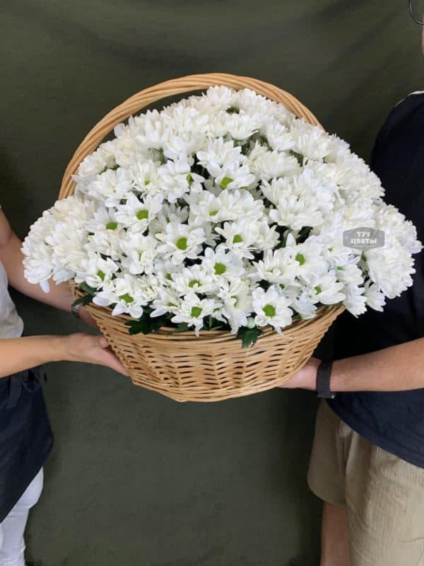 51 белая хризантема в корзине