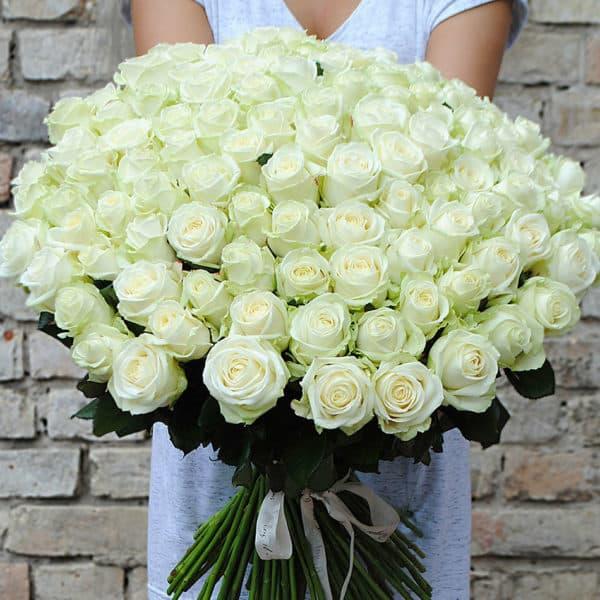 101 белоснежная роза Кения премиум