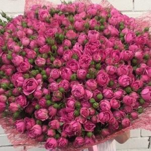 (101 пионовидные розы)