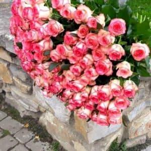 Букет из 101 розы Джумилия