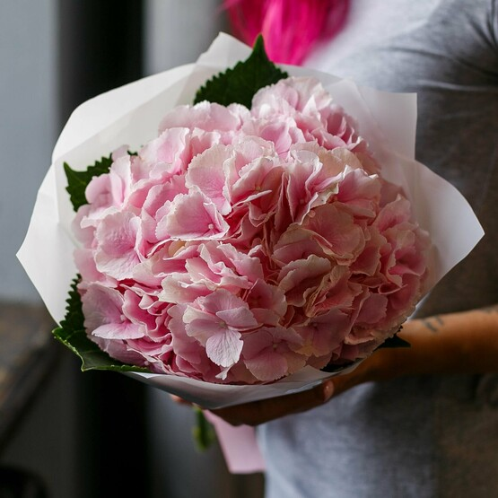 Нежная розовая гортензия