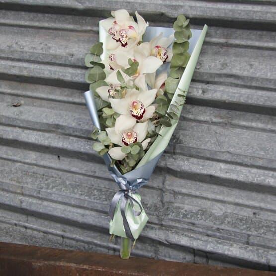 Шикарная королевская орхидея