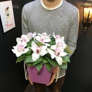 Коробочка с белыми орхидеями