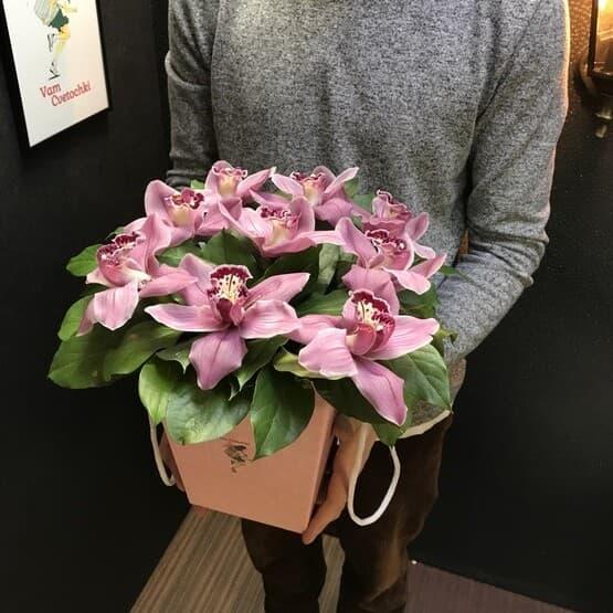 Коробочка с фиолетовыми королевскими орхидеями
