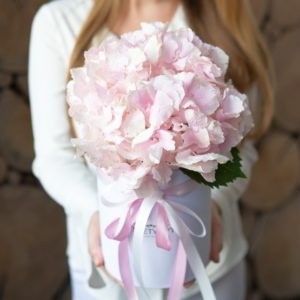Розовая гортензия в коробке